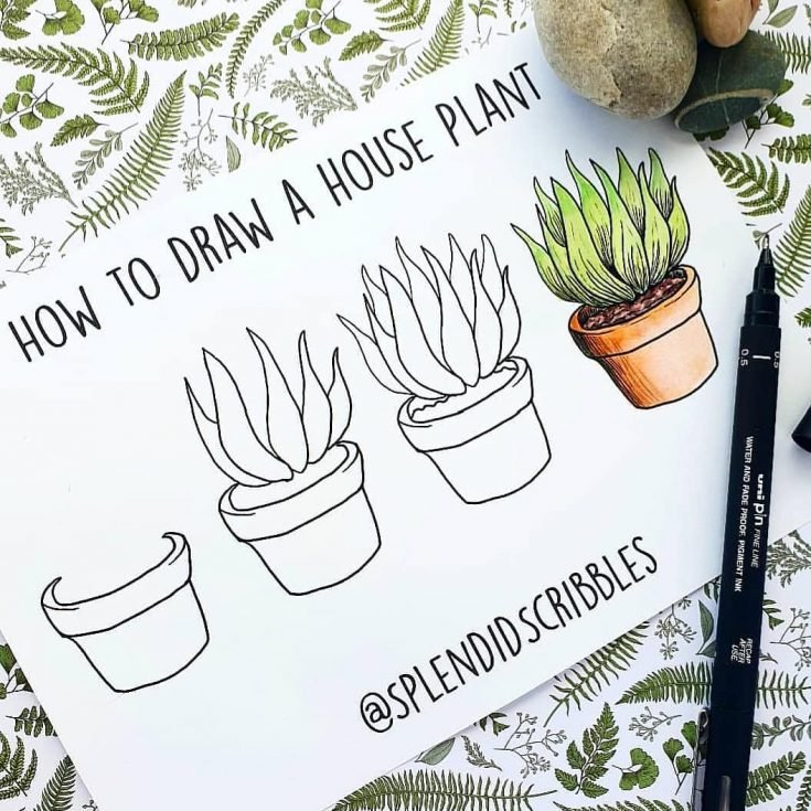 HOW TO DRAW A HOUSEPLANT