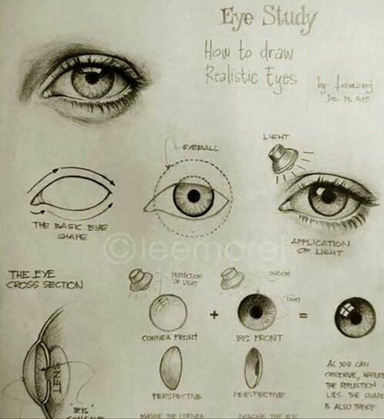 eye study anatomy