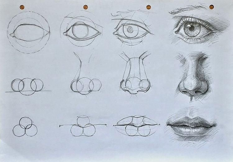 eyes nose mouth anatomy