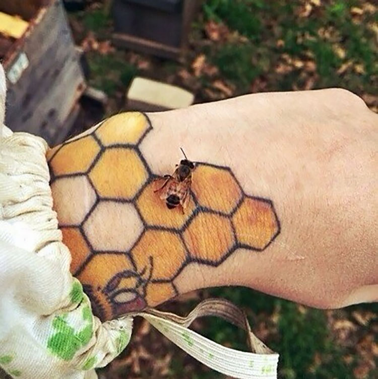 bee with honeycomb on hand