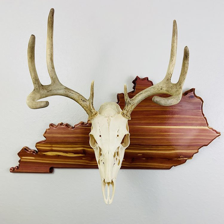STATE SHAPED SKULL MOUNT PLAQUES