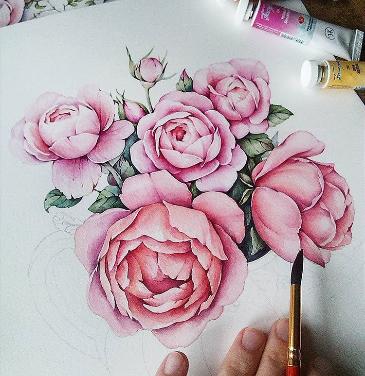 pink roses watercolor