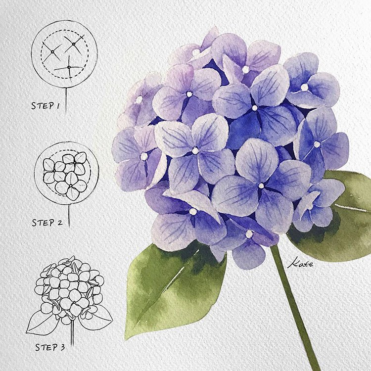 how to paint hydrangeas watercolor