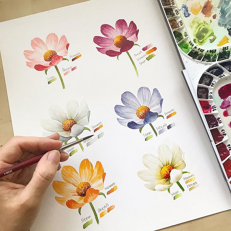watercolor flower in six different colors