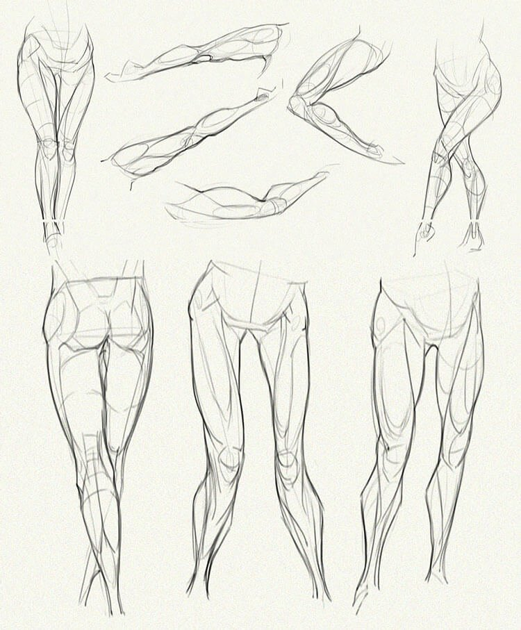 legs anatomy