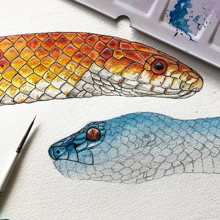 two watercolor snakes