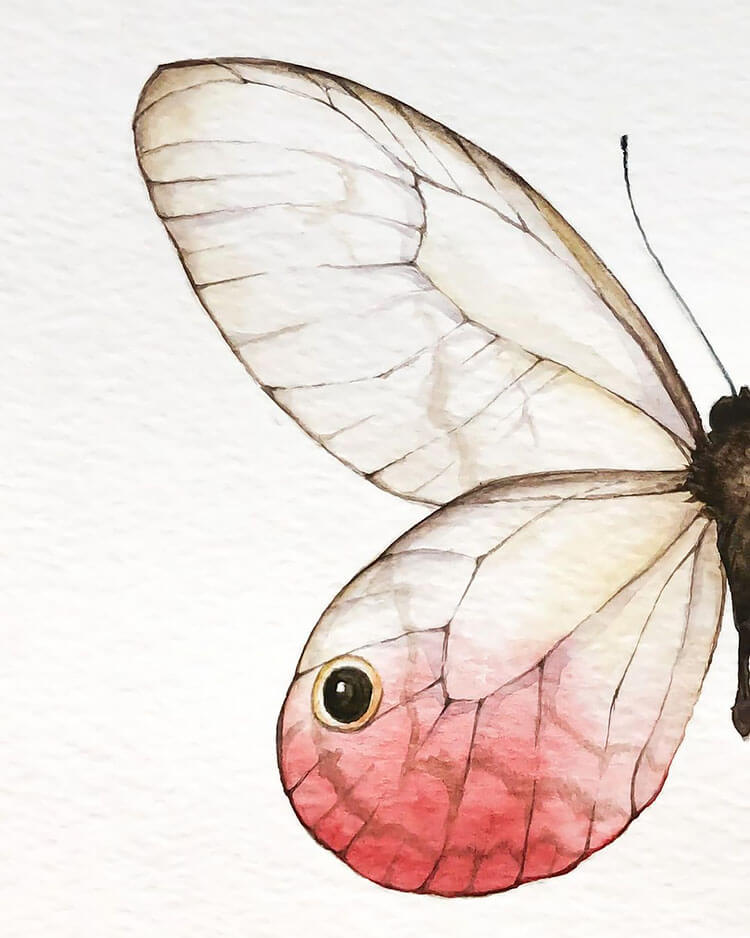 watercolor butterfly painting ideas 19
