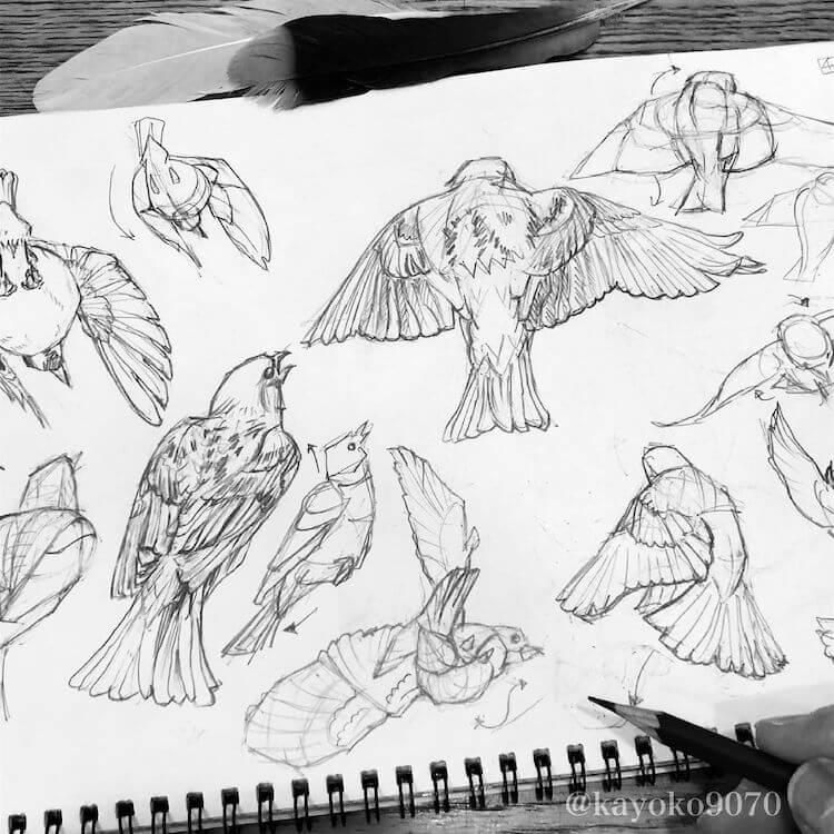 BIRD FLYING SKETCHES