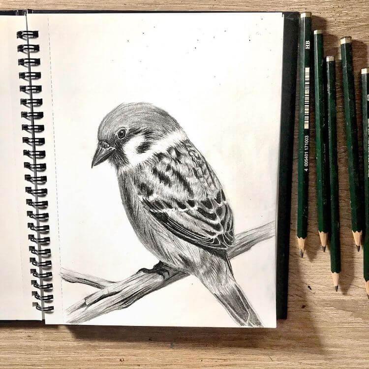 TREE SPARROW BIRD DRAWING IDEAS