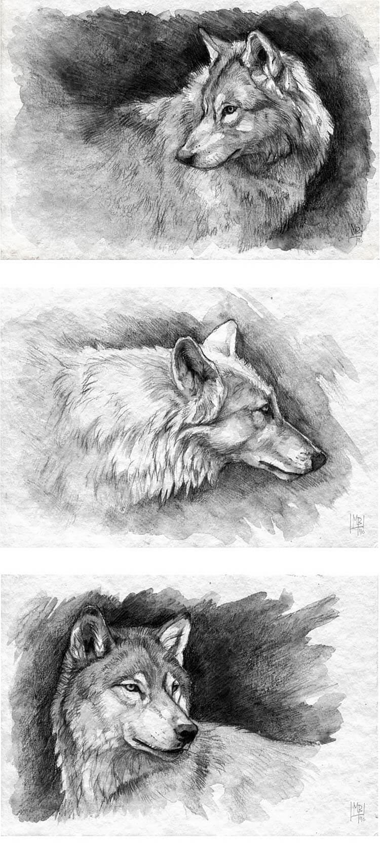 THREE WOLVES SKETCHES