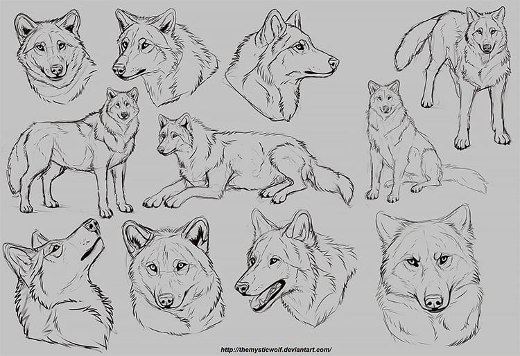 WOLVES FROM DIFFERENT ANGLES