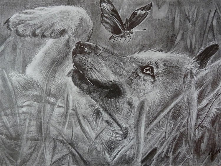WOLF PUP DRAWING WITH BUTTERFLY
