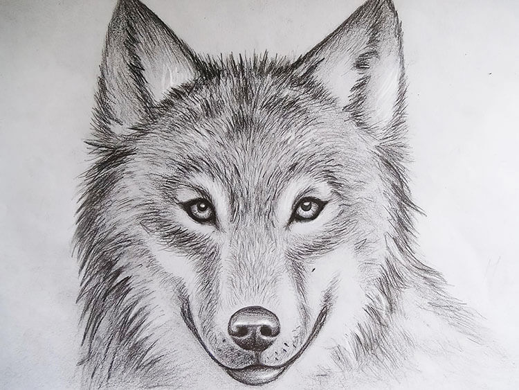 EASY WOLF DRAWING
