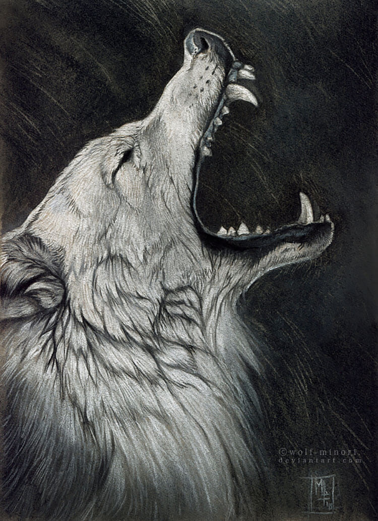 WOLF HOWLING WITH FANGS