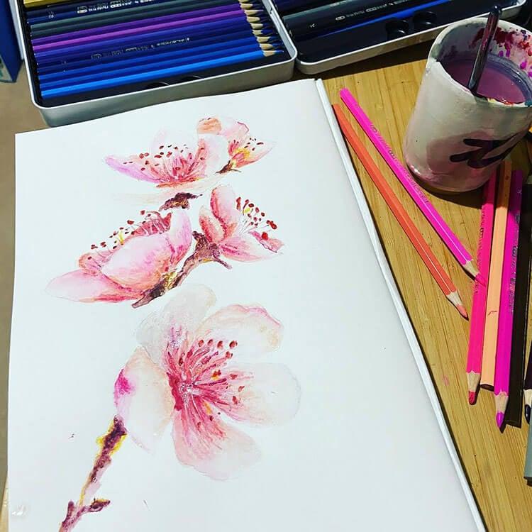 colored pencil cherry blossom
