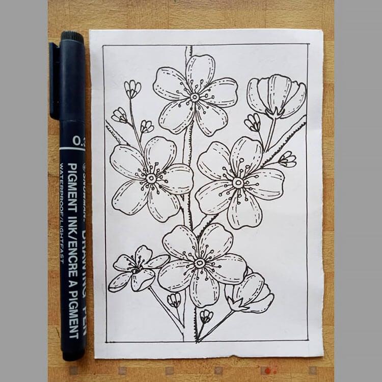 sakura coloring page
