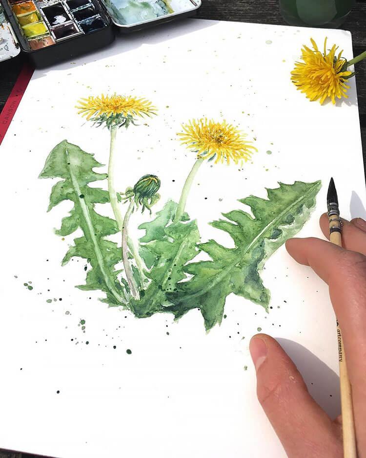 dandelion watercolor painting