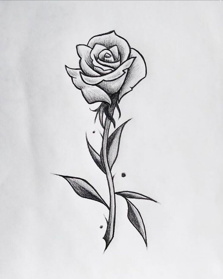 rosa con tallo y hojas