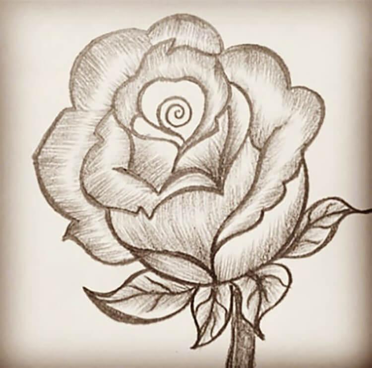 parte superior de la rosa
