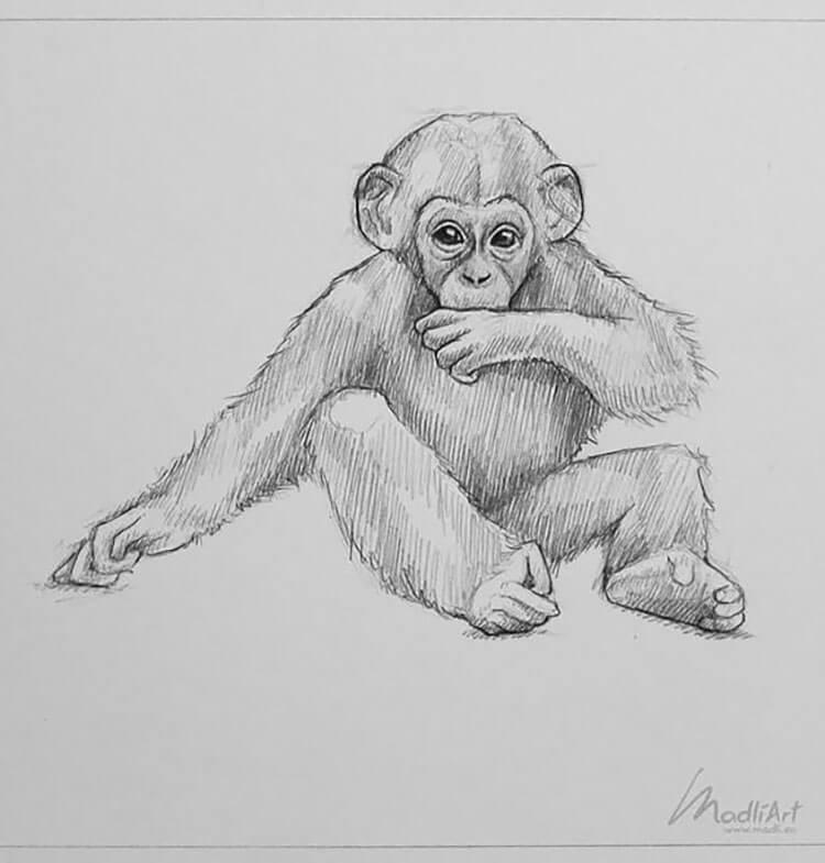 baby monkey sketch