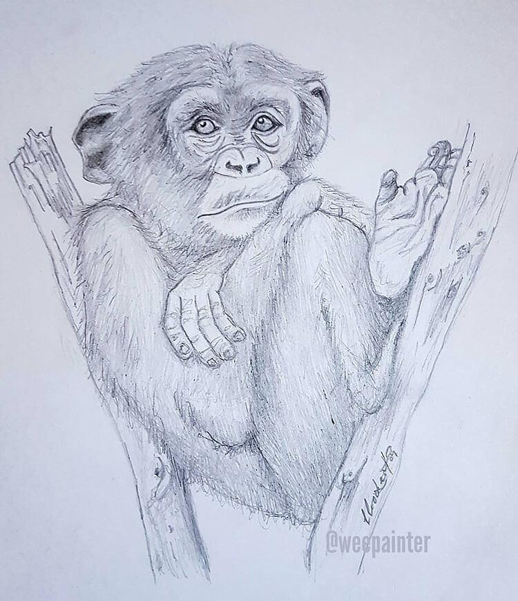 monkey sitting in tree