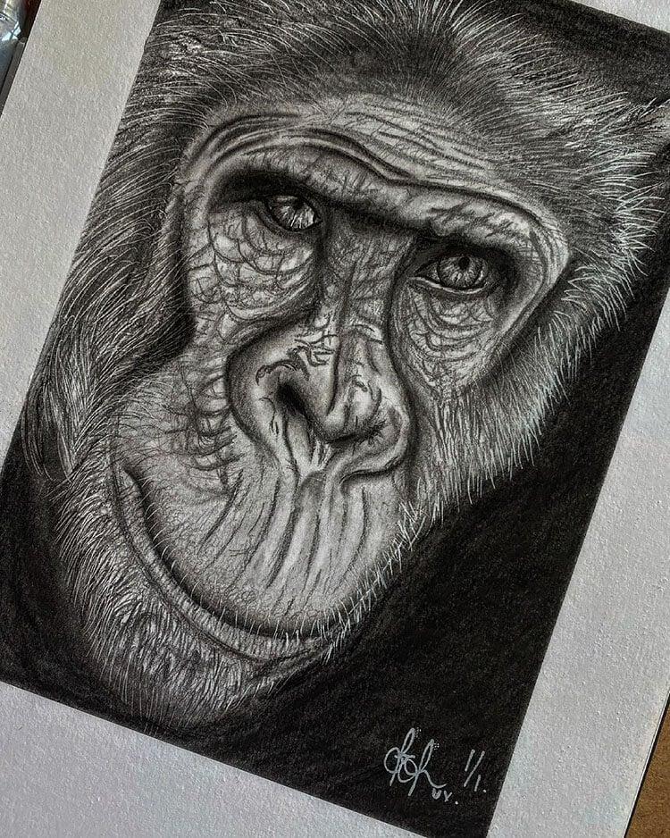 realistic chimpanzee drawing