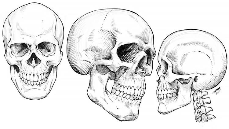 skull from different angles