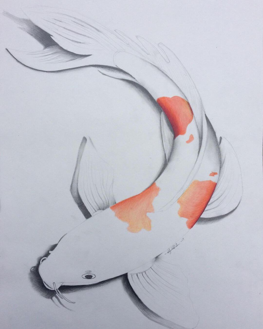 koi fish sketch