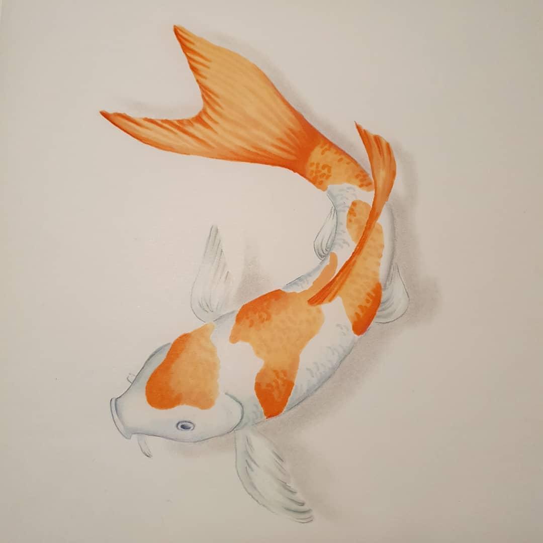 orange koi fish watercolor