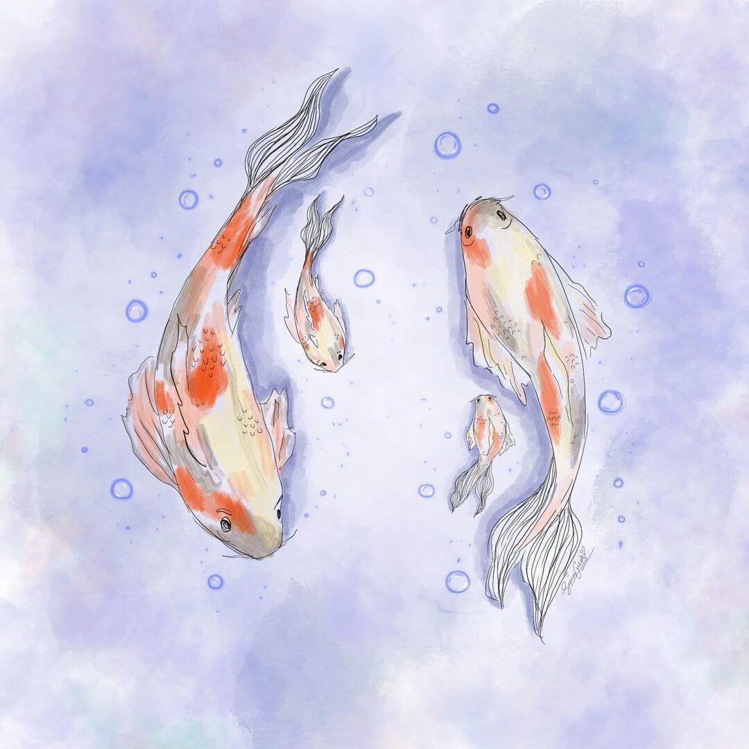 four koi fish in water