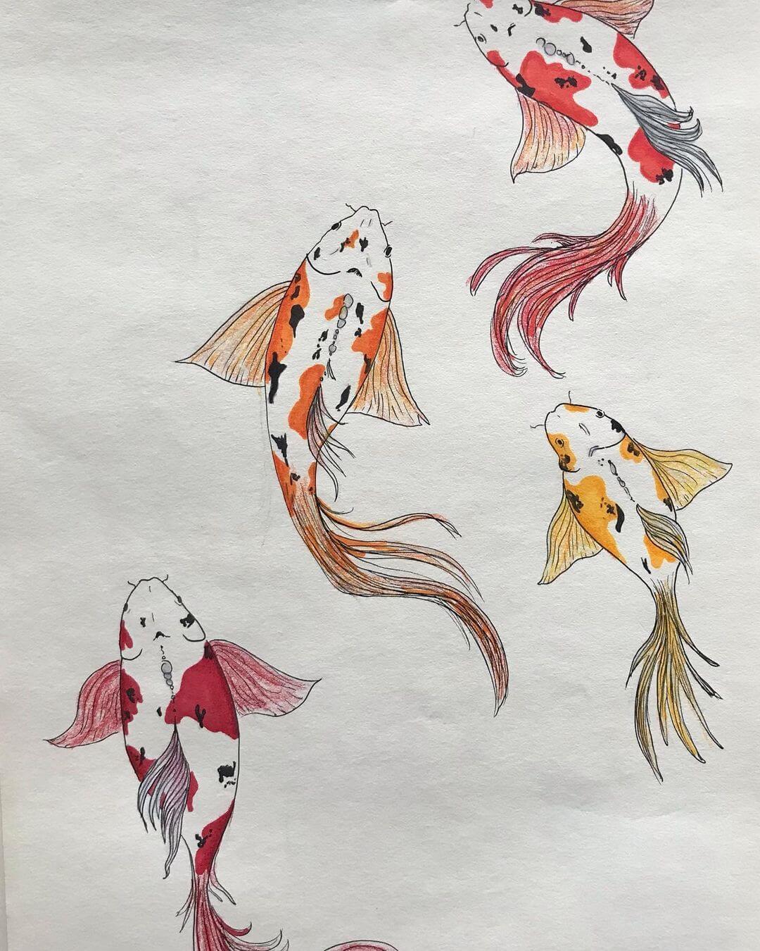 four large koi fish
