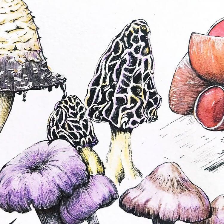 Fungi Challenge
