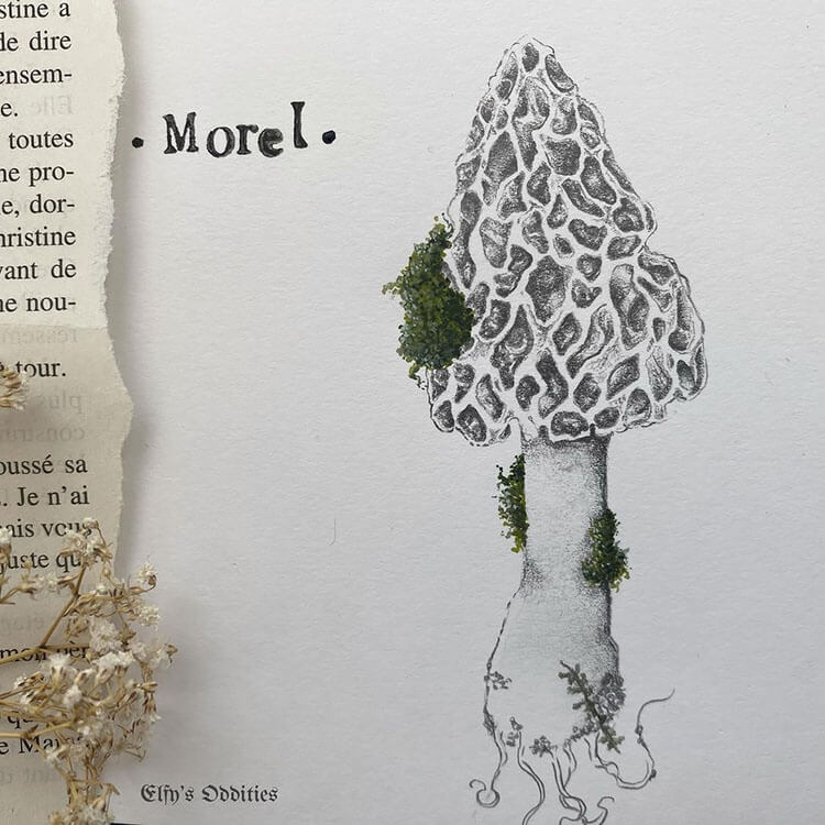 Morel with Moss