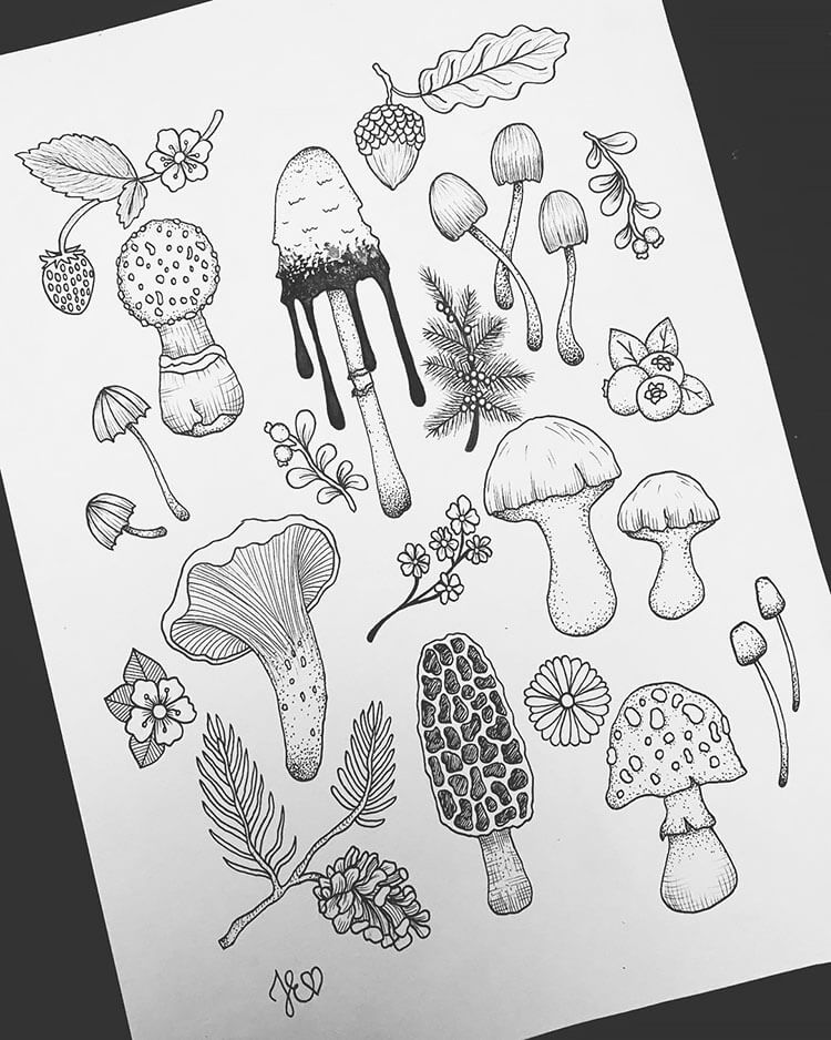 Variety of Mushrooms and Plants